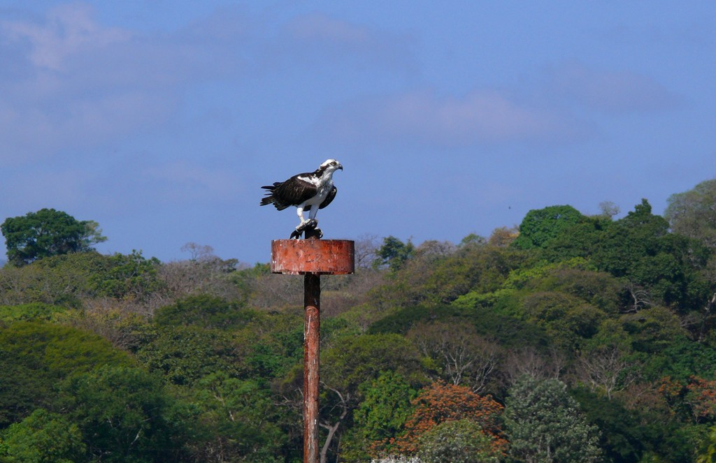 Birdwatching at and from Zopango Island (2) -res